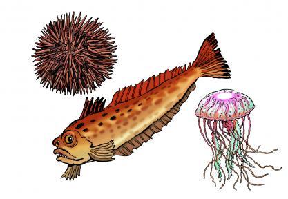 Les fiches pratiques de la SNSM Vives-oursins-meduses